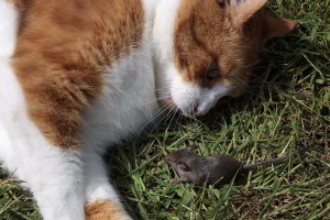 facing our fears - cat with mouse